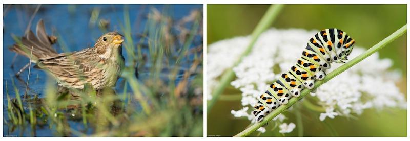 hop! Biodiversité