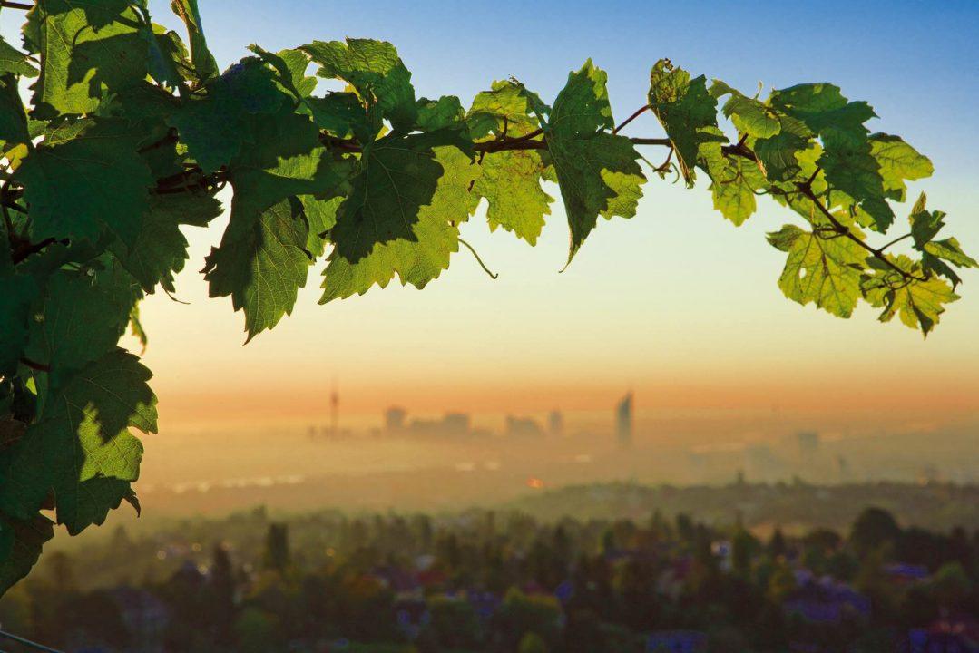 Vignoble de Vienne
