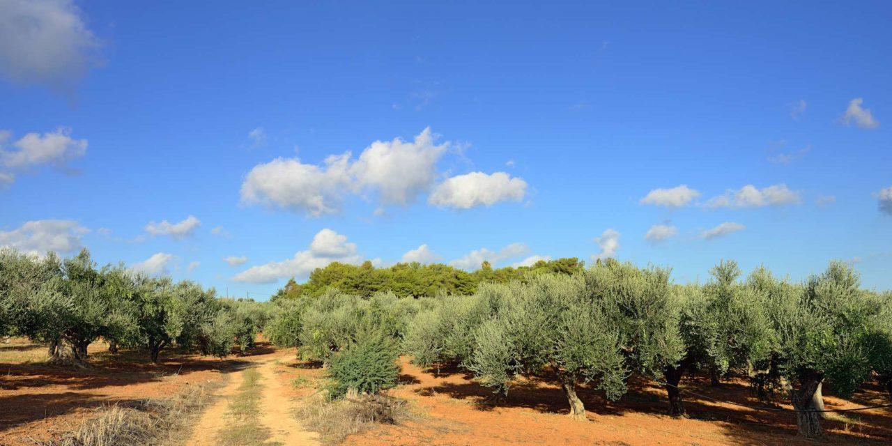 Destination Kalamata en Grèce