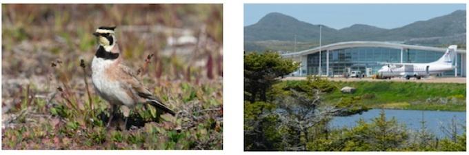 à gauche Alouette haussecol, à droite étang des herbiers devant l'aérogare