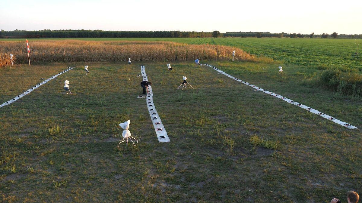 Répétition à Cestas (33) avec les 100 drones