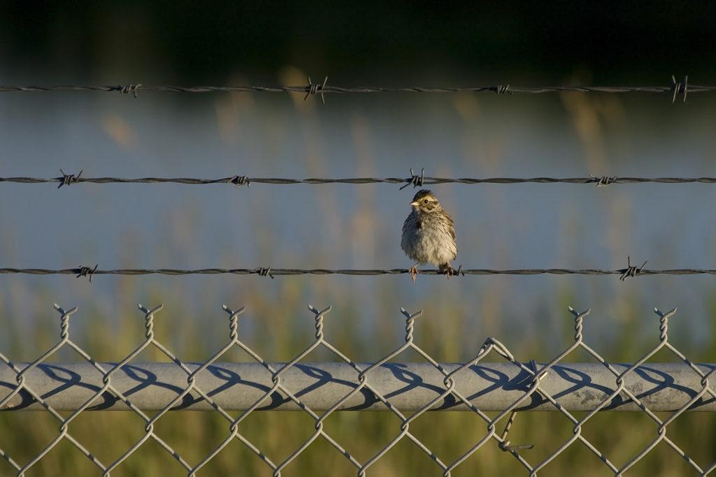 Oiseau sur une clôture d'aéroport