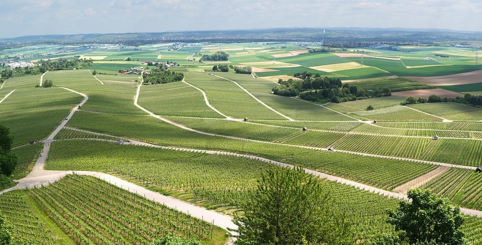Panorama viticole